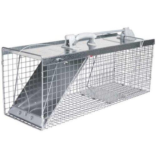 raccoon trap toronto